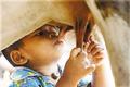 [图]妈妈走了没奶喝 小孩找奶牛喝奶