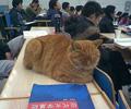 """【图】北大""""哲学猫"""""""